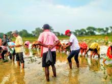 १७औ राष्ट्रिय धान दिवन- धान उत्पादनमा कृषि आत्मनिर्भरता र समृद्धि