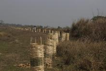 बृक्षा (बास) रोपन कार्यक्रमको तस्वीर